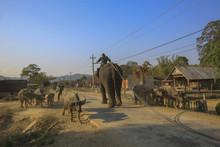 Dak Lak, Vietnam, March 11,2017: Men Riding Elephant In Village In Dak Lak Province, Vietnam