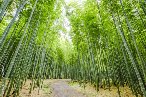 竹林の散歩道