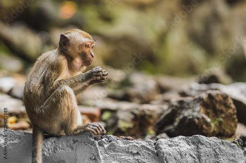 Foto op Plexiglas Aap Affe auf Felsen, Höhle