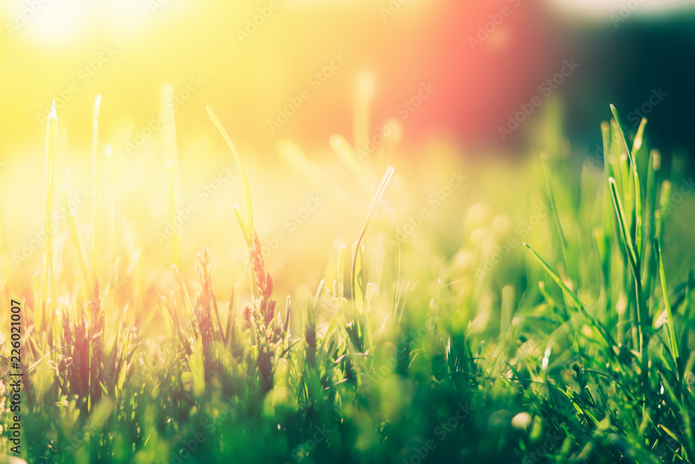 Fototapety, obrazy: Green grass background with sun light