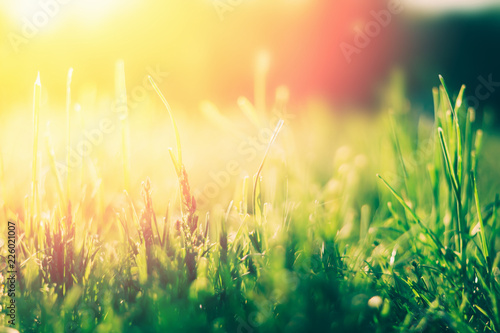 Tuinposter Zwavel geel Green grass background with sun light