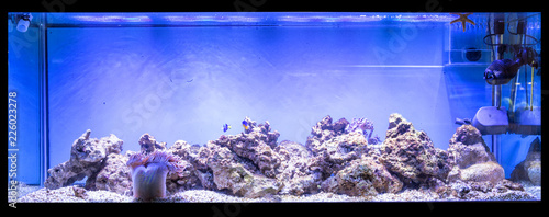 Foto Large panoramic aquarium with tropical reef fish Azure Damselfish (Chrysiptera h