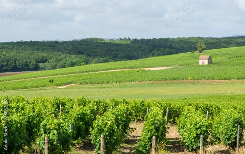 Rural loire landscape