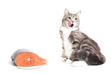 Gray Striped Cat With Red Fish...
