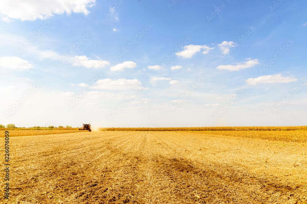 Fototapeta Combine harvester harvesting soybean at field