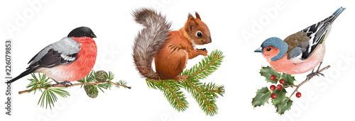 Winter animals set with birds and squirrel Wallpaper Mural