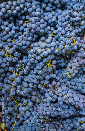 A whole box filled with ripe, organic blue grapes. Fototapete