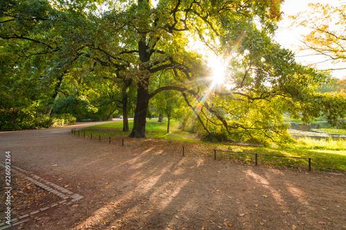 Sonnenaufgang im Park an einem Herbsttag Canvas Print