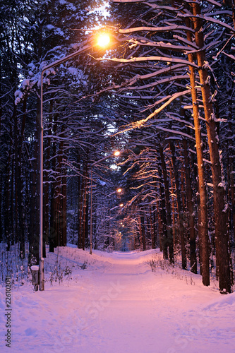 Poster Blanc Winter evening in the forest with lanterns lighting