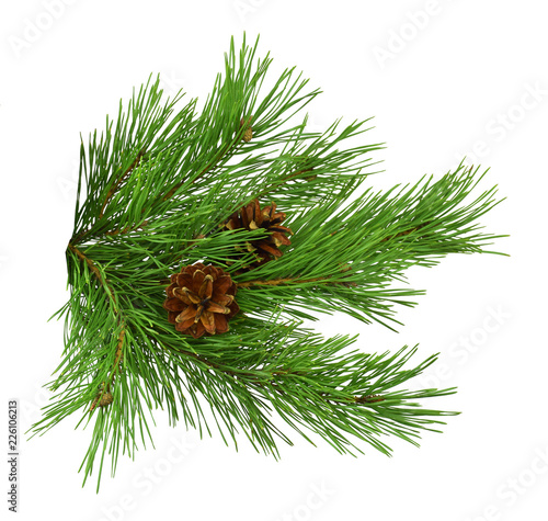 Nature Symbol of Christmas and New Year isolated on white background. Green pine, conifer tree. Pine branches with cones. Isolated without a shadow.