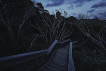 Wooden Steps Amidst Bare Trees At Shire Of Mornington Peninsula