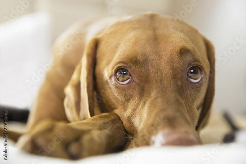 Close-up of dog looking away while relaxing on bed at home