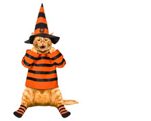 Halloween. A Cat In A Wizard Costume Celebrates Halloween.
