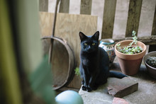 Portrait Of Black Cat Sitting On Retaining Wall By Potted Plants At Backyard