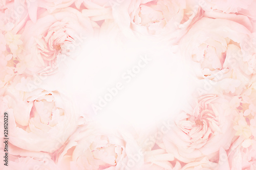 Fototapeta Summer blossoming delicate rose on blooming flowers festive background, pastel a