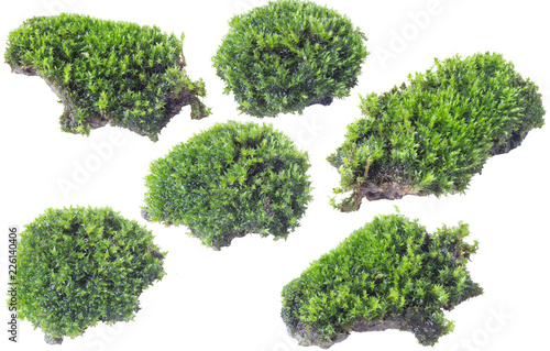 Photo Stands Bonsai Green moss isolated on white background close up.