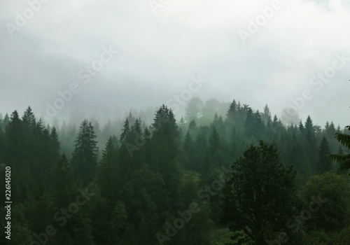 Fototapeten Wald Picturesque view of mountain forest in foggy morning