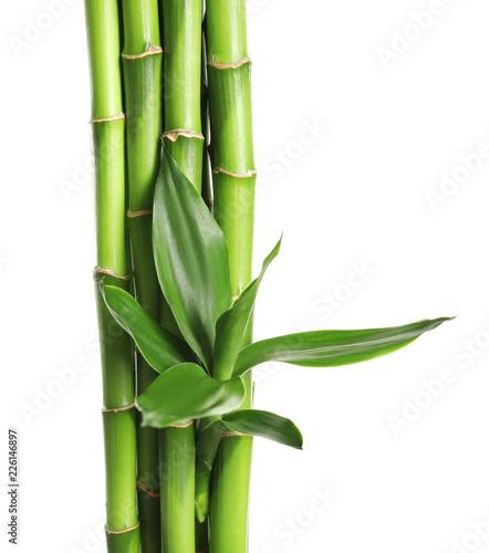 zielone-lodygi-mlodego-bambusa-na-jasnym-tle