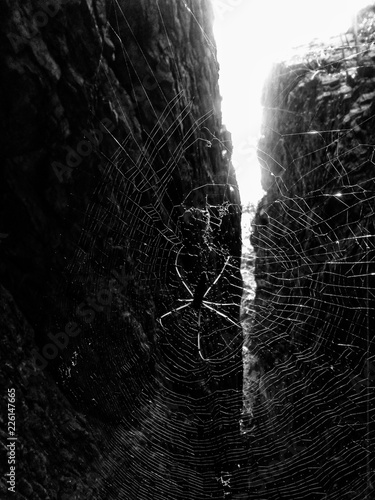 Foto-Lamellenvorhang - black and white background (von Akhil)