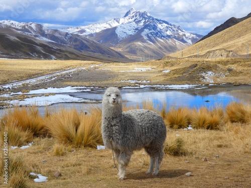 Fotobehang Zuid-Amerika land L'alpaga au bord du lac