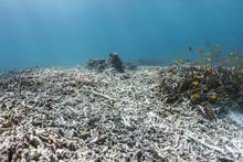Broken Reef