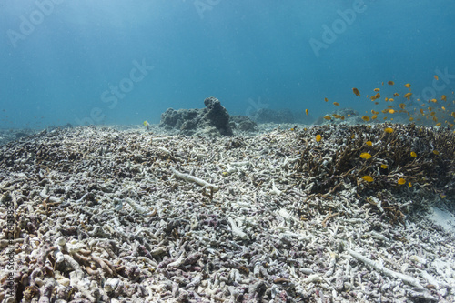 Broken Reef Fototapeta