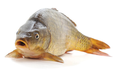 Fototapeta Big fresh carp.