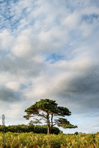 In de dag Donkergrijs Stunning Summer sunset landscape image of Bratley View in New Forest National Park England