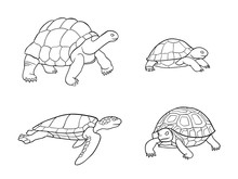 Tortoise And Turtle In Outlines - Vector Illustration