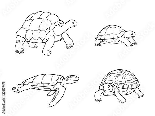 Obraz na płótnie Tortoise and turtle in outlines - vector illustration
