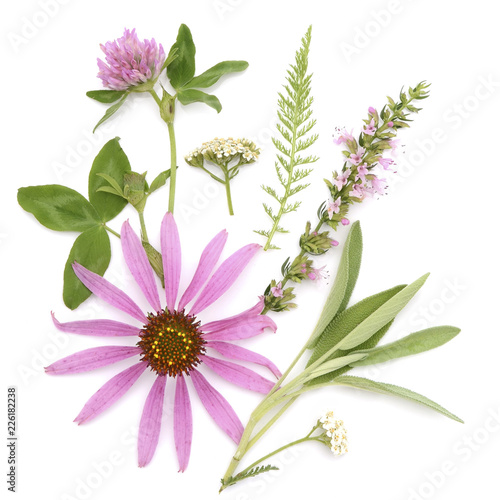 Fotografia  Healing herbs