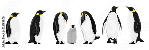 Fototapeta A set of realistic imperial penguins in different poses