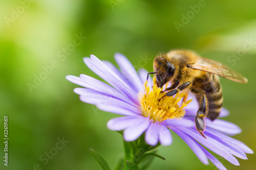 Montage in der Fensternische Bienen Honigbiene