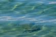 canvas print picture - Blaues Meer