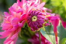 Color Outdoor Floral Macro Of ...