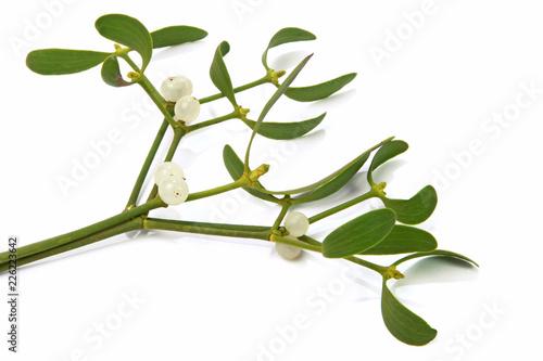 Obraz na plátně Branches de gui