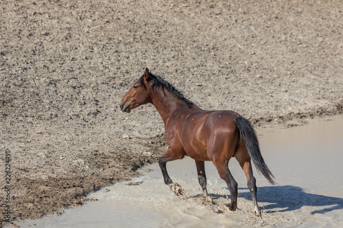 Fotografie, Tablou  Wild Horse in the Utah Desert