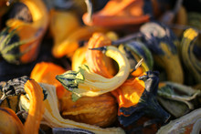 Top View Pile Of Colorful Ornamental Fall Gourds In A Crate - Autumn Halloween Or Thanksgiving Concept Background
