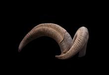Pair Of Brown Goat Horns
