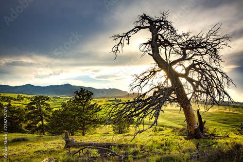Fotografija  Sunset in Medicine Bow-Routt National Forest