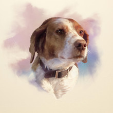 Brittany Dog Is A Breed Of Hunting, Gun Dog. Drawing Of A Cute Puppy On Watercolor Background. Animal Collection. Art Background For Design. Hand Painted Illustration Of Pet. Good For T-shirt, Pillow