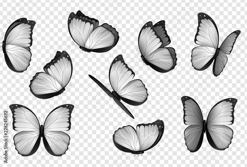 Obraz na plátně  Butterfly white isolated vector
