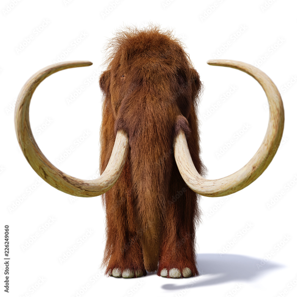 woolly mammoth, prehistoric mammal front view isolated with shadow on white background (3d illustration)