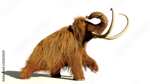 Fotografie, Obraz  woolly mammoth, walking prehistoric mammal isolated with shadow on white backgro