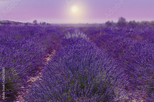 Spoed Foto op Canvas Violet Lavender field. Harvesting. Beautiful sky. Against the backdrop of mountains and clouds. French Provence. Surroundings of Valansol. Map. Toned.