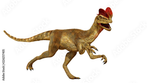 Fotografie, Obraz Dilophosaurus, theropod dinosaur from the Early Jurassic period (3d render isola