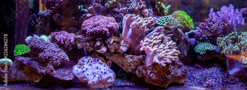 Canvas Print Underwater coral reef landscape background in the deep lilac ocean