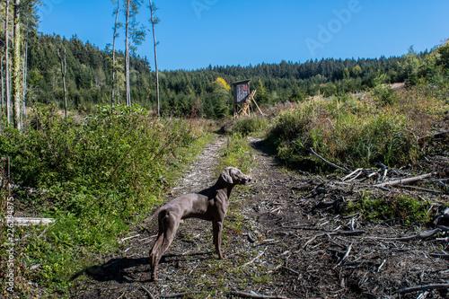 Wald, Hochsitz, Jagdhund