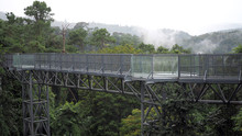 Canopy Walks To Explore Nature. Canopy Walks At Queen Sirikit Botanic Garden Chiang Mai, Thailand.