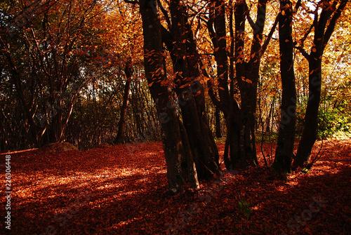 Garden Poster Brown autumn in the forest